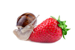 Snail creeps on a strawberry Royalty Free Stock Images