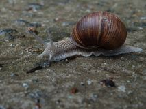 The snail creeps to its happiness royalty free stock photography