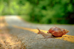 Snail crosses the yellow line on street,  Business and finance c Stock Photo
