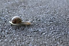 Snail crossing road Stock Images