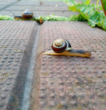 Snail Crossing stock images