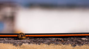 Snail crossing trough a small path on suburbs. A snail crossing the screen from left to right, taken on a suburban neighborhood in Monterrey, Mexico, at the end Stock Photography
