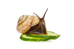 Snail and cucumber Royalty Free Stock Image