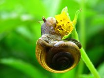 Snail, Cute, Close Up, Snail Eating Royalty Free Stock Image