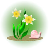 Snail and daffodil Stock Images