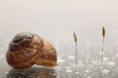 Snail and dandelion seeds Stock Photography