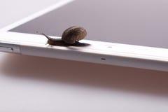 Snail on the device Stock Photos