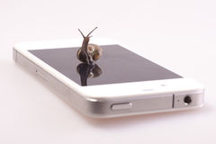 Snail on the device Stock Image