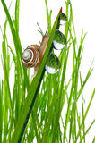 Snail on dewy grass Royalty Free Stock Photography