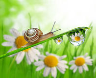 Snail on dewy grass Stock Photo