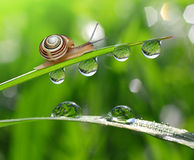 Snail on dewy grass Stock Photos