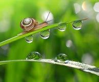 Snail on dewy grass Stock Photos