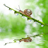 Snail on dewy grass close up Royalty Free Stock Photography
