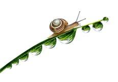 Snail on dewy grass Royalty Free Stock Photos