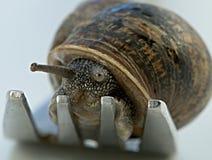 Snail dinner Stock Photos