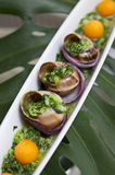 Snail dish 3 Royalty Free Stock Photography