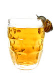 Snail Drinking Beer stock images