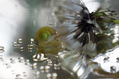 Snail and drop of water - close up. Small snail and drop of water - close up. Macrophotography with reflections, bokeh, overblown dandelion and interеsting Royalty Free Stock Image