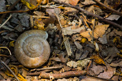 Snail dry environment Stock Images