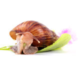 Snail eating green leaves Stock Photos