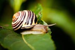 Snail in Edwards Gardens Stock Image