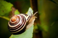 Snail in Edwards Gardens Stock Photos