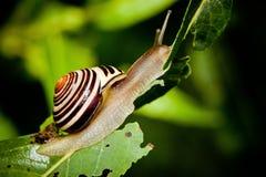 Snail in Edwards Gardens Stock Photo