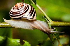 Snail in Edwards Gardens Stock Images