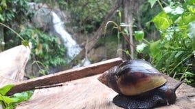 Snail ella wala - sri lanka royalty free stock image
