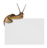 Snail on empty poster Royalty Free Stock Photos