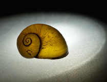 Snail empty shell - beautiful in the spotlight Royalty Free Stock Image