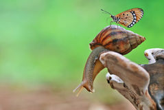 Snail end butterfly. Macro art artistic stage butterfly closu up colorful animals insect hoverfly yellow fly snail bagroud Stock Images