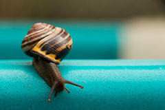 Snail Escape Royalty Free Stock Photo
