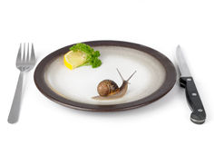 Snail escargot Stock Image