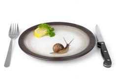 Snail escargot. Delicious escargot snail dish dinner Stock Image