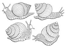 Snail escargot graphic black white isolated sketch set illustration vector. Snail escargot graphic black white isolated sketch set illustration Stock Photos