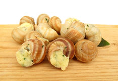 Snail escargot prepared as food Stock Photos