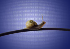 Snail on ethernet cable Royalty Free Stock Images