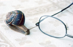Snail and eyeglasses Royalty Free Stock Photos