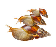 Snail family. Isolated on white background Royalty Free Stock Images