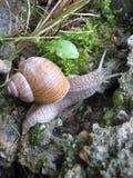 Snail-fashion model Stock Photography