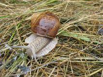 Snail-fashion model Royalty Free Stock Image
