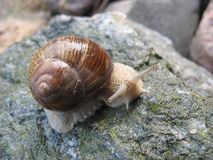 Snail-fashion model Royalty Free Stock Images
