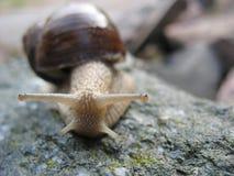 Snail-fashion model Stock Photos