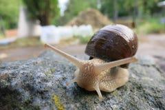Snail-fashion model Royalty Free Stock Photography