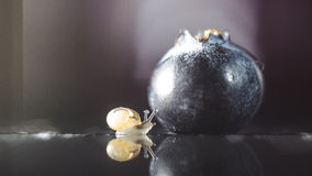 Snail finding blueberry. Close up of a snail finding a blueberry Stock Photos