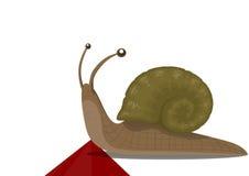 Snail on a finish Stock Image