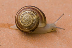 Snail on floor Royalty Free Stock Images