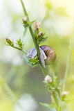 Snail on flower Royalty Free Stock Images
