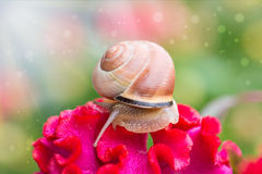 Snail on flower in  garden Royalty Free Stock Photography